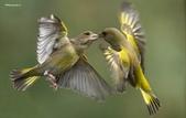 花鳥集:20140402-12.jpg