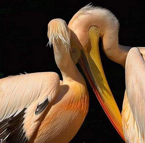 花鳥集:甜蜜鳥兒27.jpg