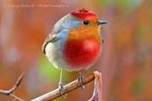 花鳥集:20140402-13.jpg