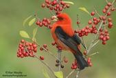 花鳥集:20140402-14.jpg