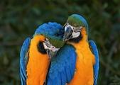 花鳥集:20140402-15.jpg