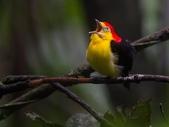 花鳥集:20140402-16.jpg