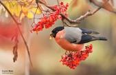 花鳥集:20140801-17.jpg