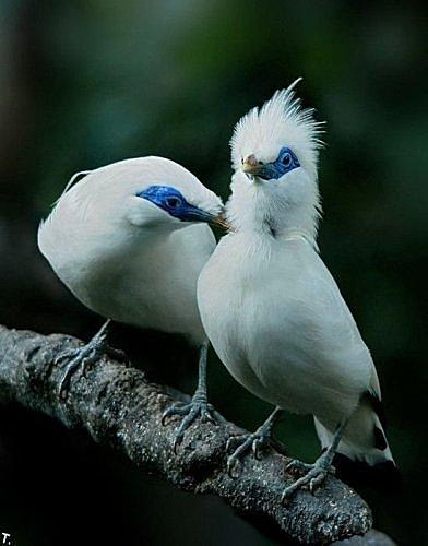 花鳥集:甜蜜鳥兒1.jpg