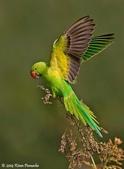 花鳥集:20140402-17.jpg