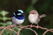 花鳥集:20140414-11.jpg