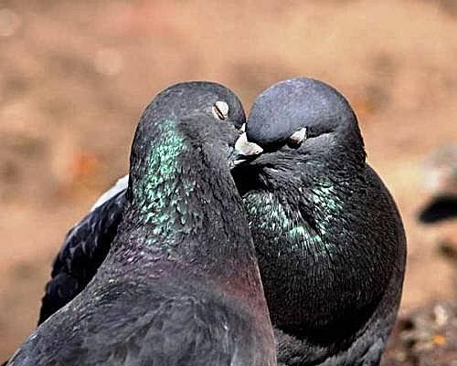 花鳥集:甜蜜鳥兒3.jpg