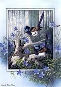 花鳥集:177254574_m.jpg