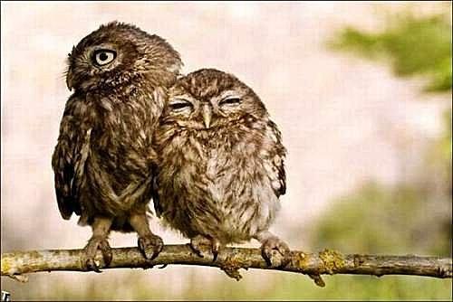 花鳥集:甜蜜鳥兒5.jpg