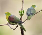 花鳥集:20140801-22.jpg