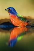 花鳥集:20140402-20.jpg