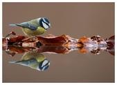 花鳥集:20140414-2.jpg
