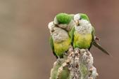 花鳥集:20140402-21.jpg