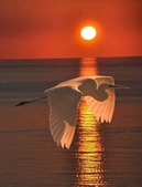 花鳥集:展翅飛姿1.jpg