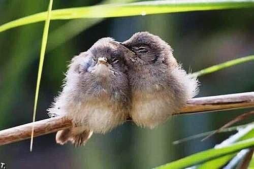 花鳥集:甜蜜鳥兒8.jpg