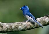 花鳥集:20140402-22.jpg