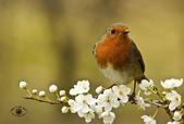 花鳥集:20140407-4.jpg