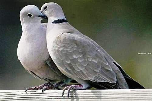 花鳥集:甜蜜鳥兒9.jpg