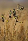 花鳥集:20140402-23.jpg