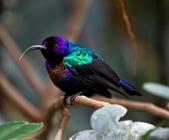 花鳥集:20140407-5.jpg