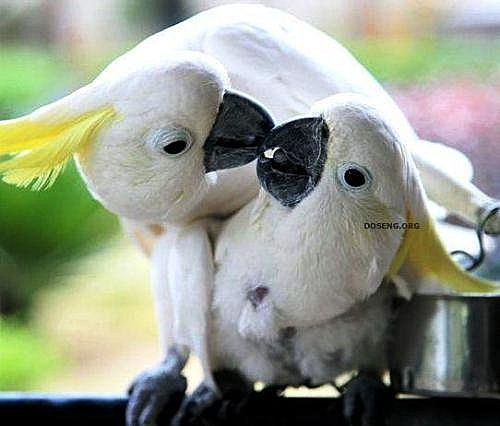 花鳥集:甜蜜鳥兒10.jpg