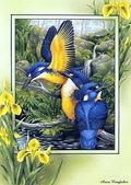 花鳥集:177254550_m.jpg