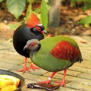 花鳥集:birds9.jpg