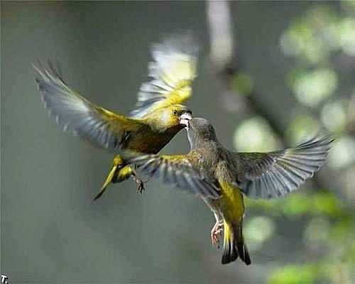 花鳥集:甜蜜鳥兒12.jpg