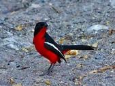 花鳥集:20140402-25.jpg