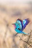花鳥集:20140407-8.jpg