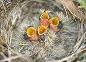 花鳥集:20140410-1.jpg