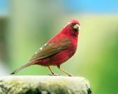 花鳥集:20140407-9.jpg