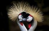 花鳥集:20140410-3.jpg