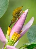 花鳥集:20140402-26.jpg