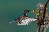 花鳥集:20140801-10.jpg