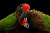 花鳥集:20140410-4.jpg