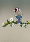 花鳥集:20140414-6.jpg