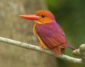 花鳥集:20140407-10.jpg