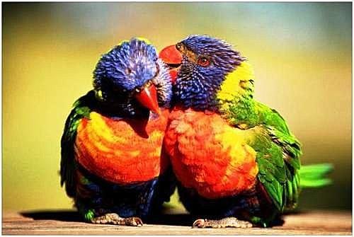 花鳥集:甜蜜鳥兒15.jpg