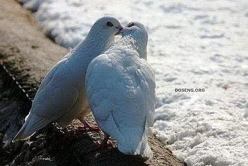 花鳥集:甜蜜鳥兒16.jpg