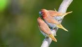 花鳥集:20140407-11.jpg