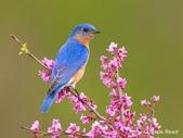 花鳥集:20140414-7.jpg