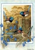 花鳥集:177254602_m.jpg