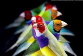 花鳥集:20140407-12.jpg