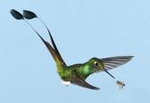 花鳥集:20140410-7.jpg