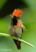 花鳥集:20140407-13.jpg