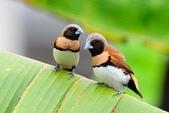 花鳥集:20140402-28.jpg