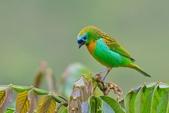 花鳥集:20140414-8.jpg