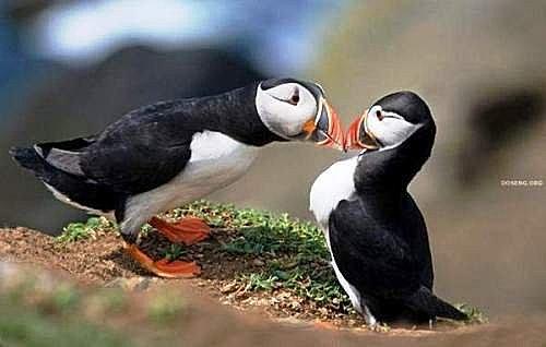 花鳥集:甜蜜鳥兒18.jpg