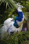花鳥集:鳥中之王14.jpg